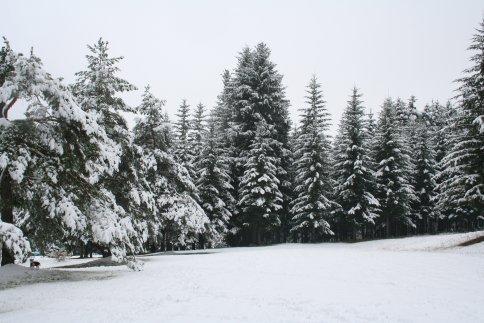 091101 初雪裏山 その他 085.jpg